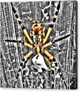Orb Spider Acrylic Print