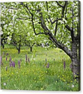 Orchard With Flowering Orchids Acrylic Print