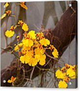Orchid - Golden Morning  Acrylic Print