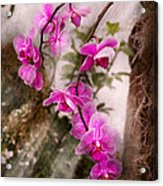 Orchid - Tropical Passion Acrylic Print