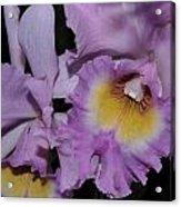Orchid 234 Acrylic Print
