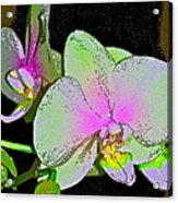 Orchid 5 Acrylic Print