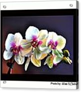 Orchid 6 Acrylic Print