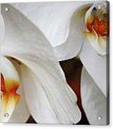 Orchid Beauty Acrylic Print