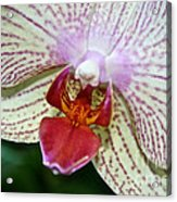 Orchid Close Up Acrylic Print