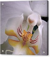 Orchid Close Up Two Acrylic Print