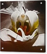 Orchid Acrylic Print by Daniele Smith