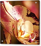 Orchid Fangs Acrylic Print