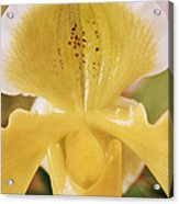 Orchid Flower Acrylic Print by Cristina Pedrazzini