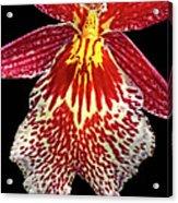Orchid Hybrid Acrylic Print