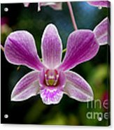 Orchid In Kandy Acrylic Print