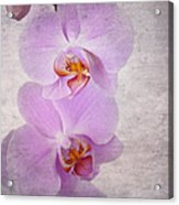 Orchid Acrylic Print by Jane Rix