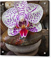 Orchid On Stack Of Rocks Acrylic Print