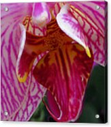 Orchid Purple Extreme Close Up Acrylic Print