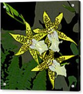 Orchid Trilogy Acrylic Print