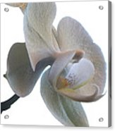 Orchids 1 Acrylic Print by Mike McGlothlen