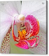 Orchids 10 Acrylic Print by Becky Lodes