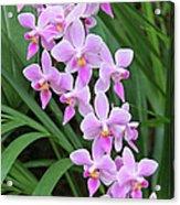 Orchids 15 Acrylic Print
