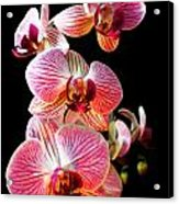 Orchids 2 Acrylic Print
