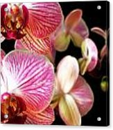 Orchids 3 Acrylic Print