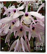 Orchids Beauty Acrylic Print