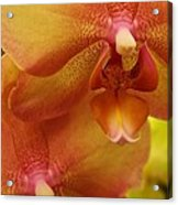 Orchids Delight Acrylic Print