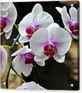 Orchids For Your Day Acrylic Print