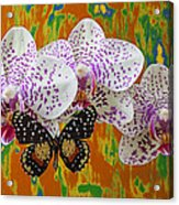 Orchids With Speckled Butterfly Acrylic Print