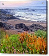 Oregon Coast Wildflowers Acrylic Print