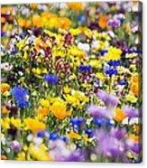 Oregon Wildflowers Acrylic Print