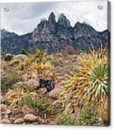 Organ Mountains  Sotol Plants Acrylic Print