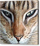 Oriental Cat Acrylic Print