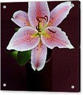 Oriental Lilly Acrylic Print