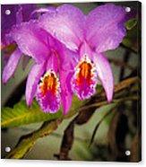 Orquideas Flor De Mayo Del Bosque Nublado Acrylic Print