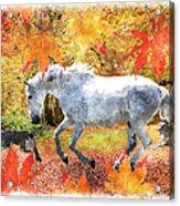 Osada's Fall Fun Acrylic Print