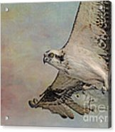 Osprey And Fish Acrylic Print