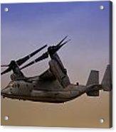 Osprey In Flight II Acrylic Print