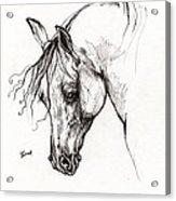 Ostragon Polish Arabian Horse 1 Acrylic Print