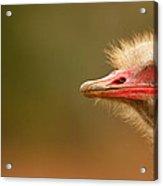 Ostrich Eye Acrylic Print
