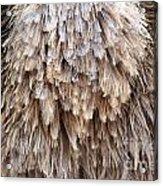Ostrich Fluff Acrylic Print