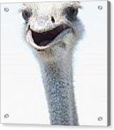 Ostrich Neck Acrylic Print