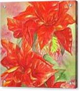 Other Poinsettia Acrylic Print