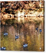 Out For A Swim Acrylic Print by Bill Cannon