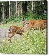 Out For A Walk Acrylic Print