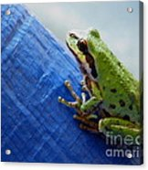 Out From Under The Blue Tarp Acrylic Print