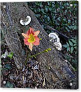 Out Of Decay Acrylic Print