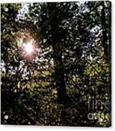 Out Of The Darkness He Calls Acrylic Print