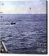 Out To Sea Acrylic Print by Madeline Ellis