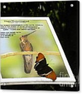 Outbound Butterfly Acrylic Print