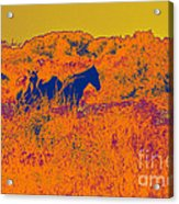 Outer Banks Horses Acrylic Print